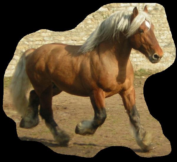 paard zweet veel